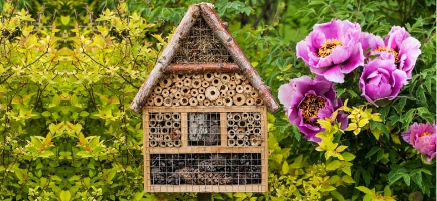 inspirational bee program chula vista california