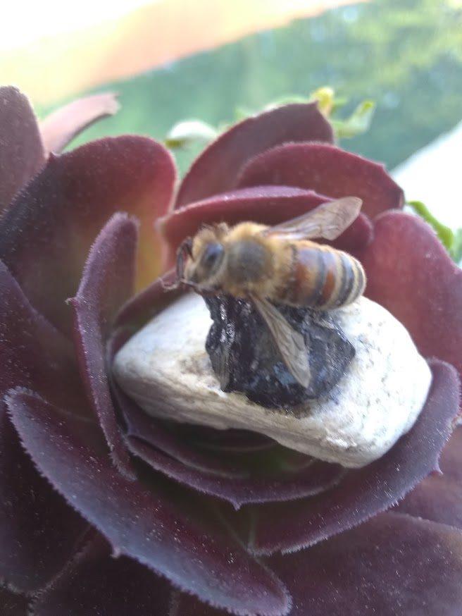 Bee Simple