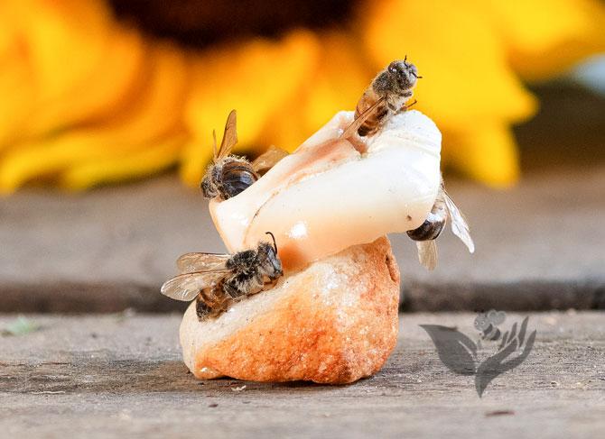 Bee Vibrant