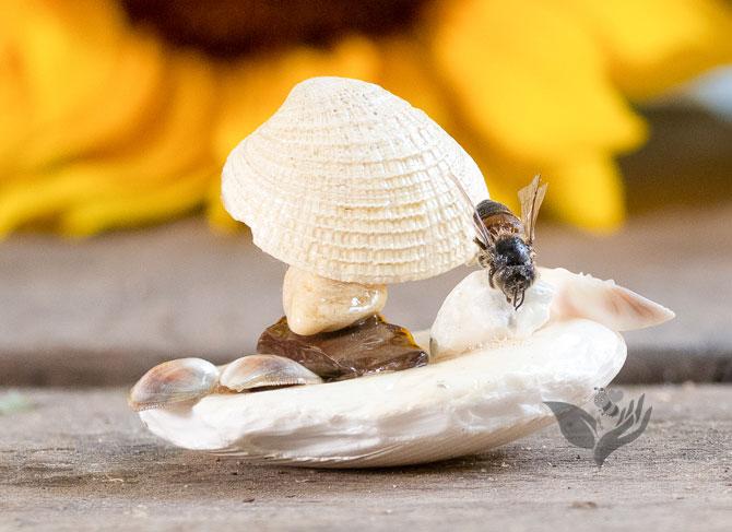 Bee Minimal